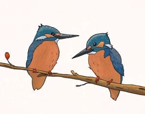 geboortekaartje jongen tweeling vogeltjes
